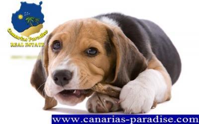 Residencia Canina, Núcleo Zoológico.